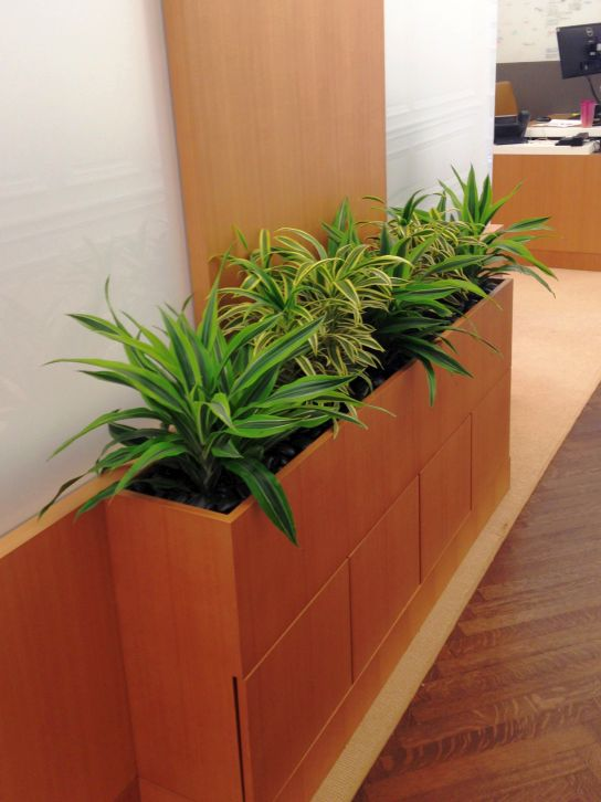 interior plantscaping installations