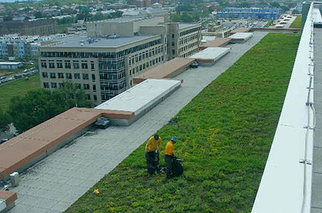 green roofs dc