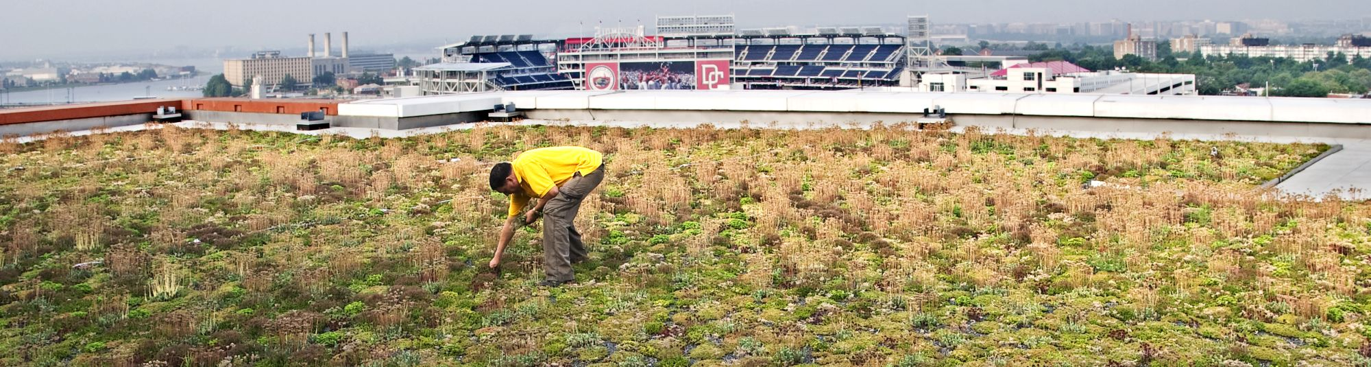 green roofs company dc