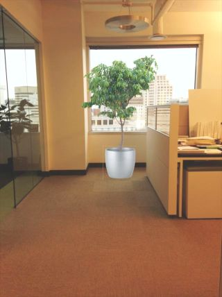 Office Plant Services DC