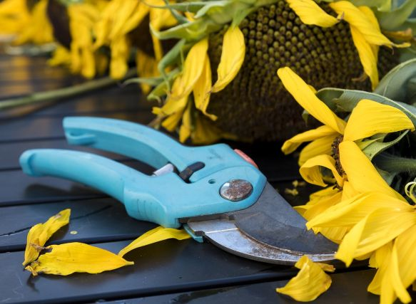 indoor plantscaping hygiene cleaning tools and shears